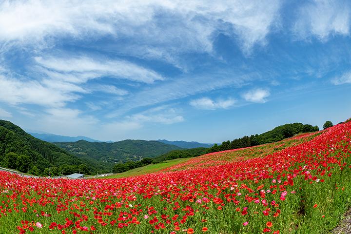 blog_pic00632.jpg
